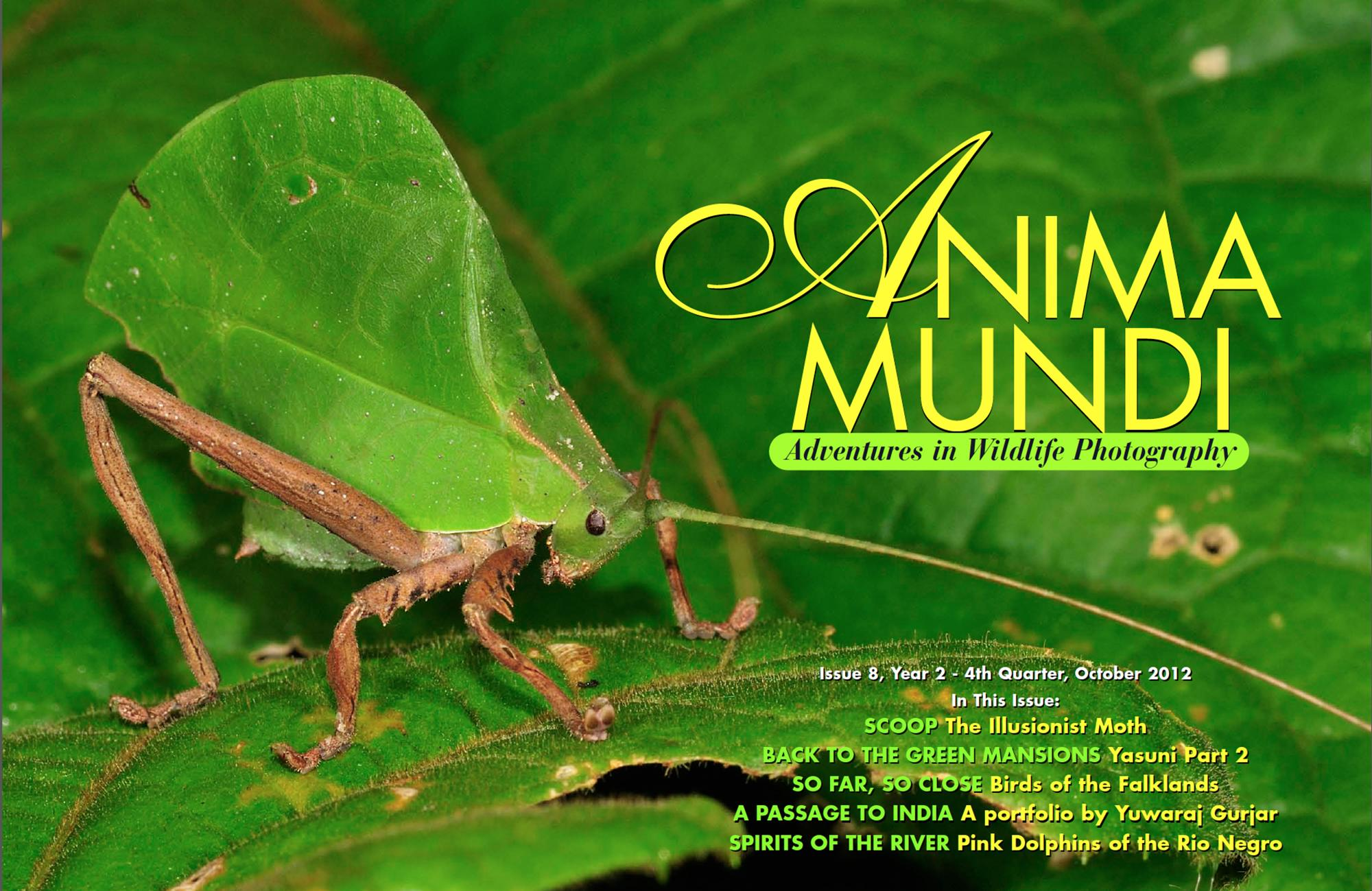 Issue 8 | Anima Mundi Magazine